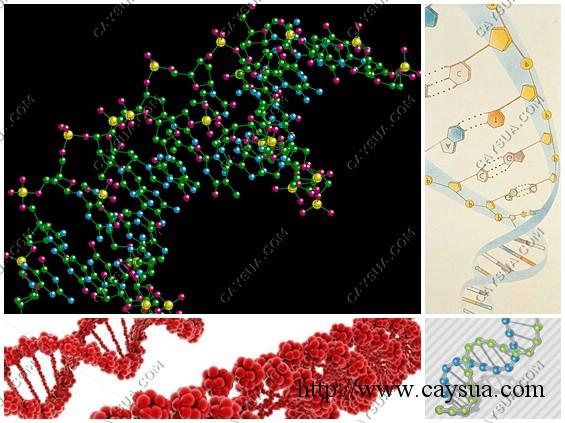 DNA cây sưa đỏ [minh họa]