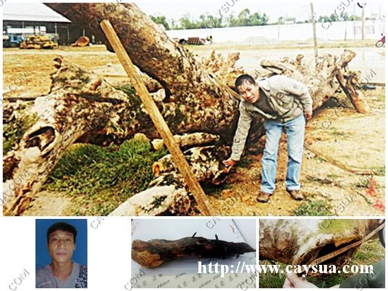 Nguyễn kim Hoàng Lừa đảo bán cây gỗ sưa đỏ giả với giá 4 tỷ đồng