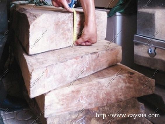 Khối gỗ sưa trị giá lớn