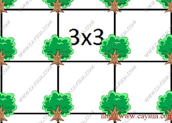 Khoảng cách trồng cây gỗ sưa đỏ [cây cách cây 3 mét]