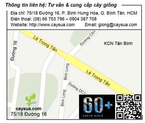 Địa chỉ bán giống cây sưa đỏ tại Tp.Hồ Chí Minh
